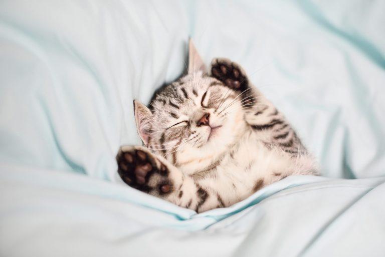 Autohypnose et sommeil